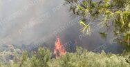 Ηλεία: Μαίνεται η μεγάλη φωτιά στην Ηράκλεια (φωτο+video)