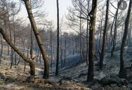 Φωτιά στη Ρόδο: Άρχισε η καταγραφή των ζημιών