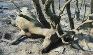 Βαρυμπόμπη: Η φρίκη της φωτιάς - Ζώα βρήκαν μαρτυρικό θάνατο στις φλόγες (φωτο)