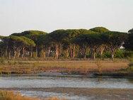 Απαγορεύεται η πρόσβαση σε Στροφυλιά, Γιαννισκάρι, Καλόγρια και στα δάση της ορεινής Αχαΐας