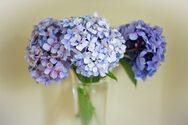 Έξυπνα tips για να διατηρήσετε τα άνθη σας περισσότερες ημέρες