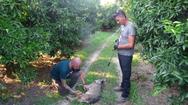 Θεσπρωτία: Ο «Αρκτούρος» απεγκλώβισε λύκο που πιάστηκε σε παγίδα για αγριόχοιρους