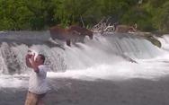 Άνδρας μπήκε στο νερό για να φωτογραφηθεί με τις αρκούδες Grizzly (video)