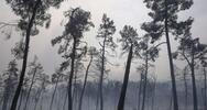 Ιταλία: 1.580.000 στρέμματα δασικών εκτάσεων έχουν καεί μέσα στο 2021