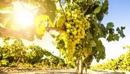 Το αντιγηραντικό φρούτο που προστατεύει τη μνήμη