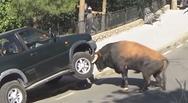 Αστείες και τρομακτικές συναντήσεις με ζώα (video)