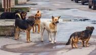 Δυτική Ελλάδα: Δήμος αποζημιώνει γυναίκα που τραυμάτισε αδέσποτος σκύλος
