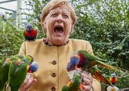 Γερμανία: Όταν παπαγάλος δάγκωσε τη Μέρκελ που θέλησε να τον ταΐσει (video)