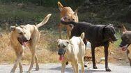 Πάτρα: Σκυλί επιτέθηκε σε φοιτήτρια στο Πανεπιστήμιο - Επιστρέφουν τη Δευτέρα οι φοιτητές... θα τους υποδεχτούν αγέλες αδέσποτων