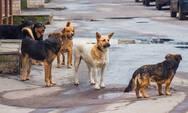 Πάτρα: Νέα επίθεση από αδέσποτα σκυλιά σε φοιτήτρια στους χώρους της Πανεπιστημιούπολης
