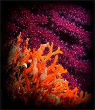 Οι ''κρυμμένες'' ομορφιές του Κοριθιακού... Δείτε φωτογραφίες!
