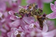 Μια κάμπια που μοιάζει με λουλούδι (pics+video)