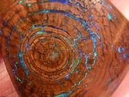 Οπάλιο μιμείται τους δακτυλίους ενός δέντρου (pics)