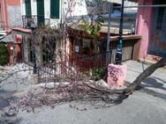 Πάτρα: Η ανθισμένη αμυγδαλιά της Γεροκωστοπούλου που τσάκισε!