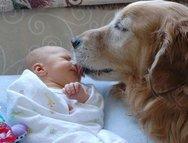 Απίστευτο βίντεο - Σκυλιά προστατεύουν παιδί από «λυσσασμένη» γυναίκα