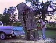 Η κοπή ενός δέντρου δεν ήταν και τόσο καλή ιδέα (video)