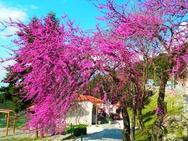 Καλέντζι Αχαΐας: Κυριακάτικη βόλτα στο χωριό των Παπαναδρέου! (pics)