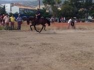 Eπίδειξη με άλογα στην παραλία της Ακράτας! (Δείτε φωτογραφίες)