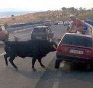 Tαύρος σκορπά τον τρόμο στους δρόμους της Ισπανίας! (video)