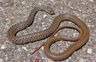 Και άλλο φίδι στην Πάτρα: Αυτή τη φορά στην περιοχή της Αγίας Σοφίας!