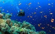 Ντουμπάι: Ένα εντυπωσιακό υποβρύχιο πάρκο (pics+video)