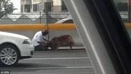 Μια δραματική διάσωση σκύλου σε αυτοκινητόδρομο (video)