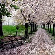 Τα πιο όμορφα δάση και μονοπάτια στον κόσμο (pics)