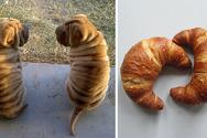 Αξιολάτρευτοι σκύλοι που μοιάζουν... με κάτι άλλο! (pics)