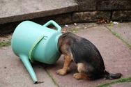 Χαριτωμένα σκυλάκια... ''κολλημένα'' σε διάφορα αντικείμενα (pics)