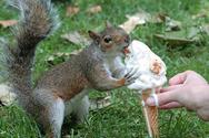 Όταν τα ζώα πεινάνε... (pics)