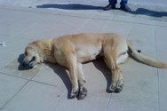 Δηλητηρίασαν σκυλάκια στη Ράχη Κάτω Αχαΐας