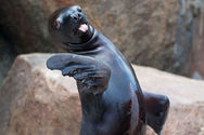 Ζώα βγάζουν την γλώσσα τους στο φακό!