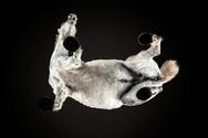 Φωτογραφίζοντας άλογα από κάτω (pics+video)