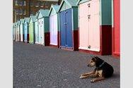 Ο σκύλος που διασώθηκε από τον δρόμο και τώρα ταξιδεύει σε όλο τον κόσμο