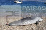 Πάτρα - Νεκρό δελφίνι στην παραλία της Ροδινής (φωτο)