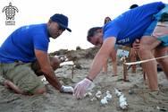 Ενημερωτική εκδήλωση για την προστασία της θαλάσσιας χελώνας στο Εθνικό Πάρκο Κοτυχίου-Στροφυλιάς!