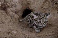 Gyra - H φονικότερη γάτα του κόσμου (video)