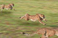 Αυτά είναι τα πιο γρήγορα ζώα στη γη (video)