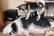 Σκύλος προσπαθεί επίμονα να ξυπνήσει τον φίλο του (video)