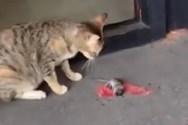 Κινηματογραφική απόδραση… ποντικιού (video)