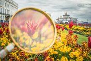 Βλέποντας τα ανθισμένα λουλούδια της άνοιξης μέσα από μεγεθυντικό φακό (φωτο)