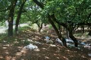Περιβαλλοντικό έγκλημα στην Κάπελη!