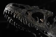 Παρίσι: Πουλήθηκε απολίθωμα δεινοσαύρου σε δημοπρασία