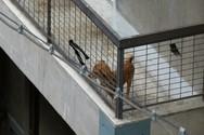 Πάτρα: Είχε μόνιμα δεμένο το σκύλο του σε μπαλκόνι
