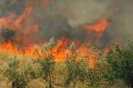 Ηλεία - Υπό έλεγχο η πυρκαγιά που ξέσπασε στην Κορυφή