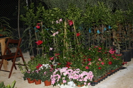 Αχαΐα: Προχωρούν οι προετοιμασίες για την διοργάνωση της 17ης Αγροτικής Έκθεσης από τον Δήμο Ερυμάνθου