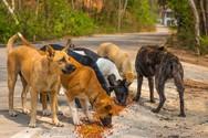 Πάτρα: Έχουν αυξηθεί κατακόρυφα οι δηλητηριάσεις των ζώων από φόλες