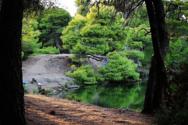 Το δάσος της Στροφυλιάς σκορπίζει τη μαγεία με τα χρώματα του (pics)