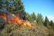 Η Ε.Ε. προσπαθεί να μειώσει τις καταστροφικές επιπτώσεις των δασικών πυρκαγιών