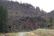 Ξεριζώθηκαν 14 εκατομμύρια δέντρα στην Ιταλία (video)